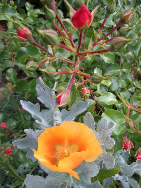 Rosepoppy1949
