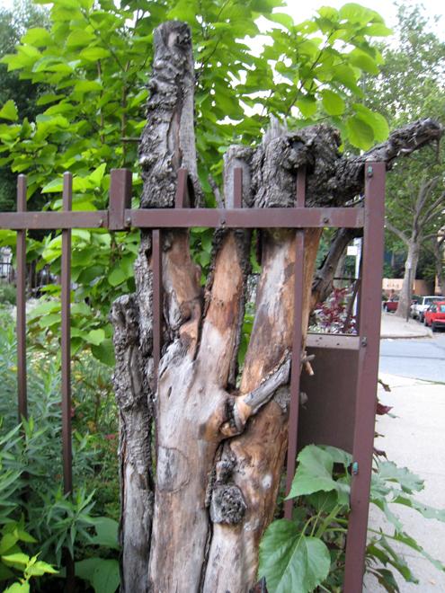 Treestump2598