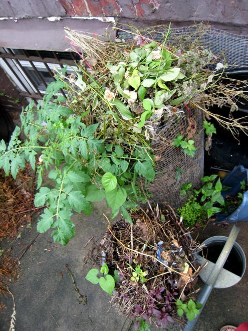 Compost2617