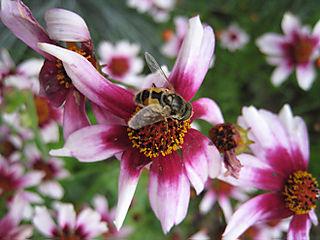 Bee2679
