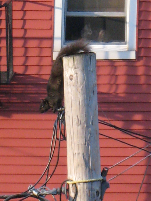 Squirrel2051