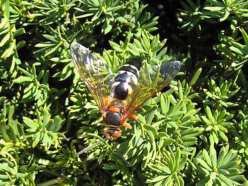 Cicadakiller3124