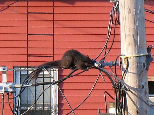 Squirrel2048