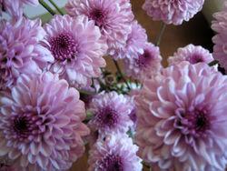 Bouquet3667