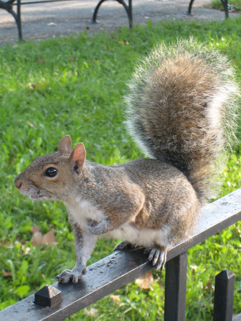 Squirrel4079
