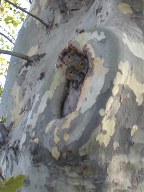 Squirrels4077