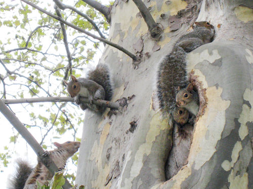 Squirrels4212