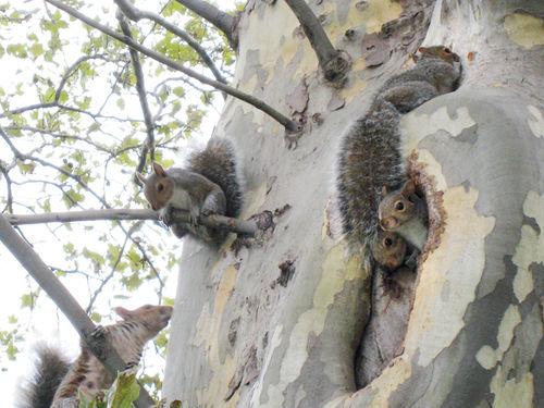 Squirrels4212
