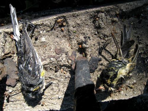 Birds4356