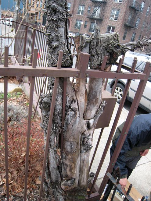 Tree5796