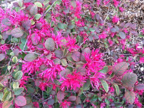 Clashy shrub combo