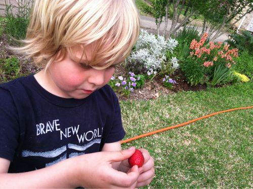 Garden strawberry!