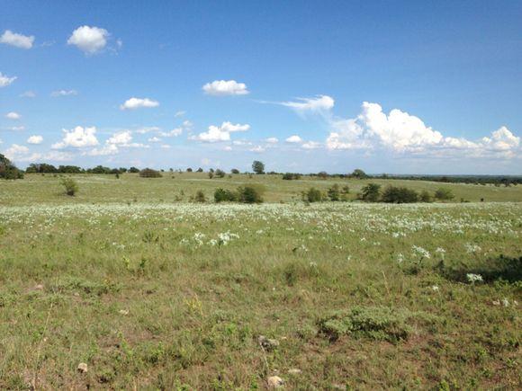 Wildflower ranching