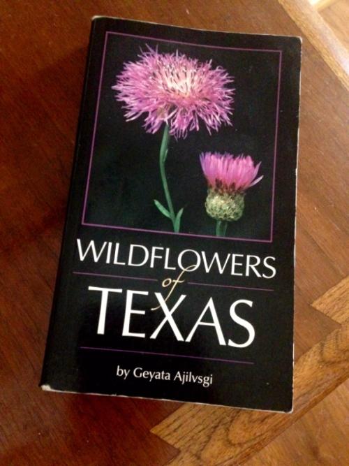 WildflowersofTX