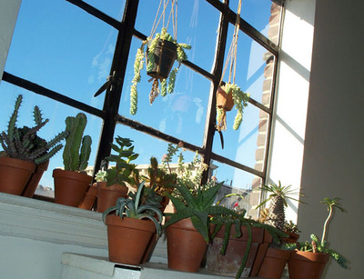 Succulents5980