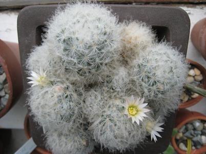 Cactus1029