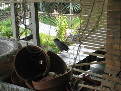 Catbird0991