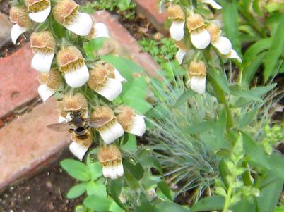 Bee1456