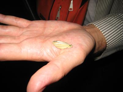 Whitebutterfly1707