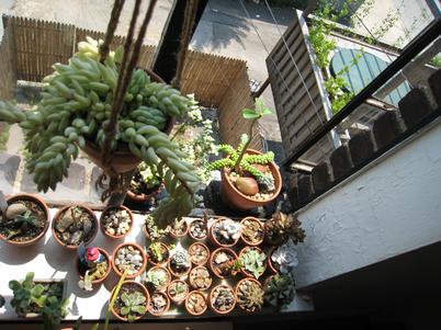 Succulents1789