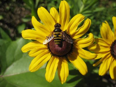 Bee2311