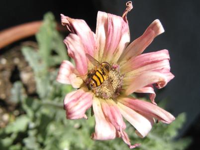 Bee2327