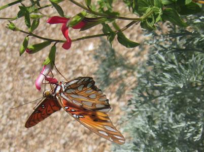 Butterfly3066