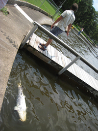 Fish3428_2
