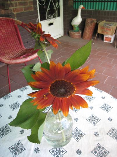 Sunflower4559