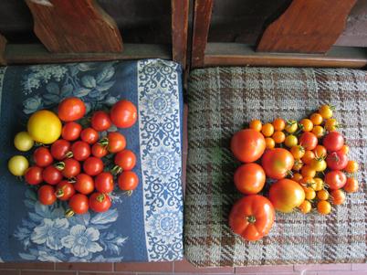 Tomatoes4565