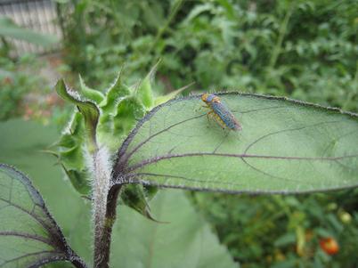 Bug4282