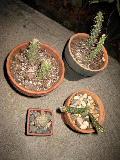 Cactus4207