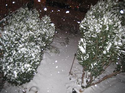 Snow9483