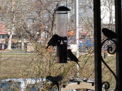 Birdfeeder9583