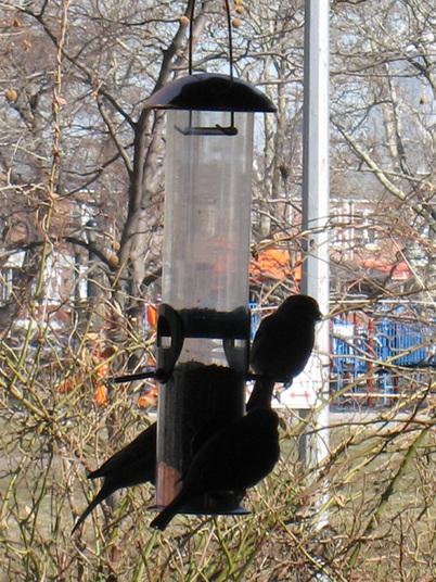 Birdfeeder9588