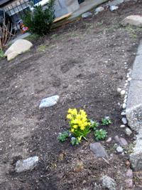 Daffodils9911