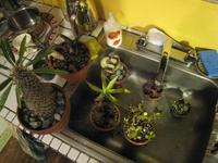 Succulents0474