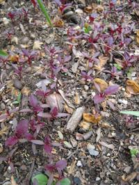 Seedlings0545_2