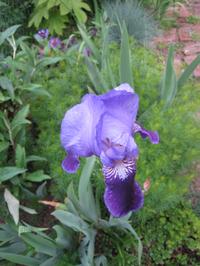 Iris1023_2
