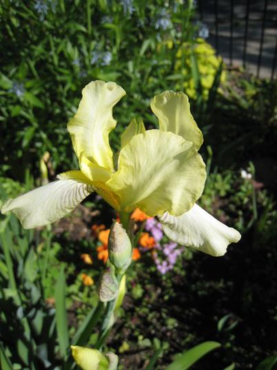 Iris1083